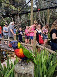 Bird in zoo aviary