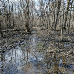 Flooded, muddy forest trail