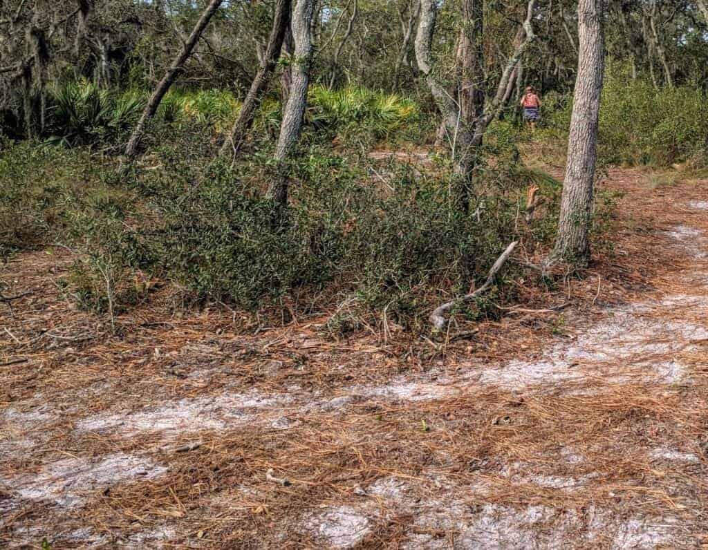 A trail runner in Wickham Park, Melbourne, FL
