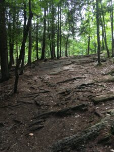 Rocky trail in the woods