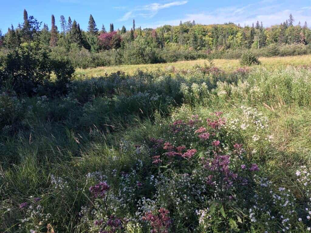 A meadow at Porcupine Mountains Wilderness State Park