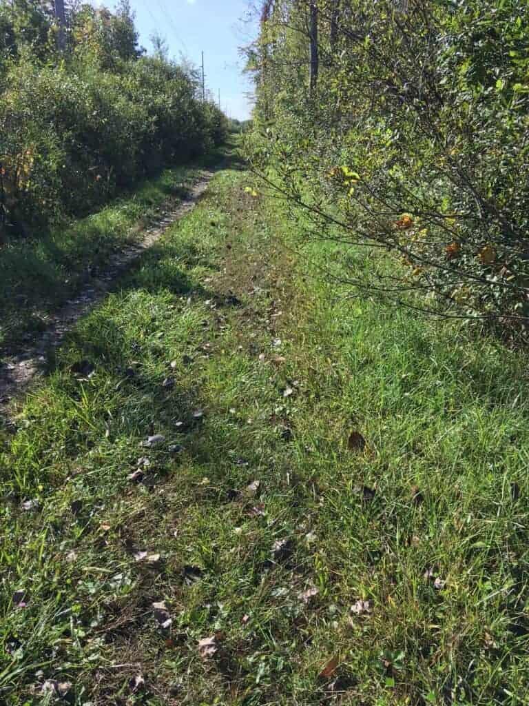 The grassy, unimproved Van Buren Trail State Park